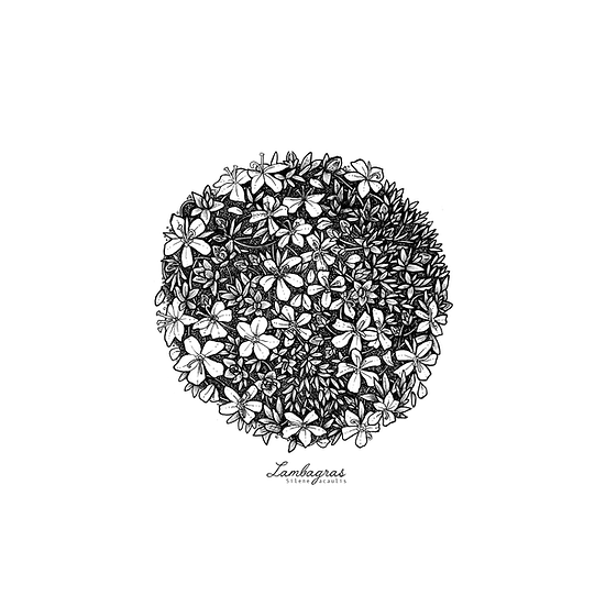 Lambagras // Moss Campion