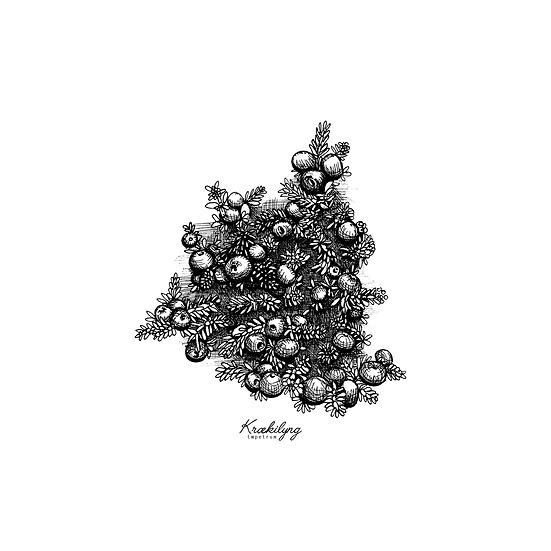 Krækilyng I // Crowberry I