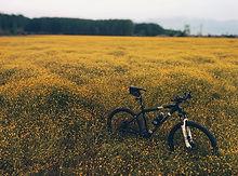 fahrrad.jpeg
