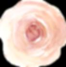 Ranunculus 2.png