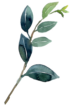 Camelia leaves.png