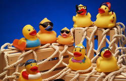 ca-sunny-the-duck-1463667321.jpg