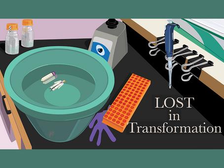 Lost in Transformation