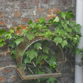 Brussels: A hedra no seu labirinto | The ivy in its maze