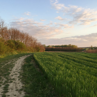 Pécs: Timeless walk