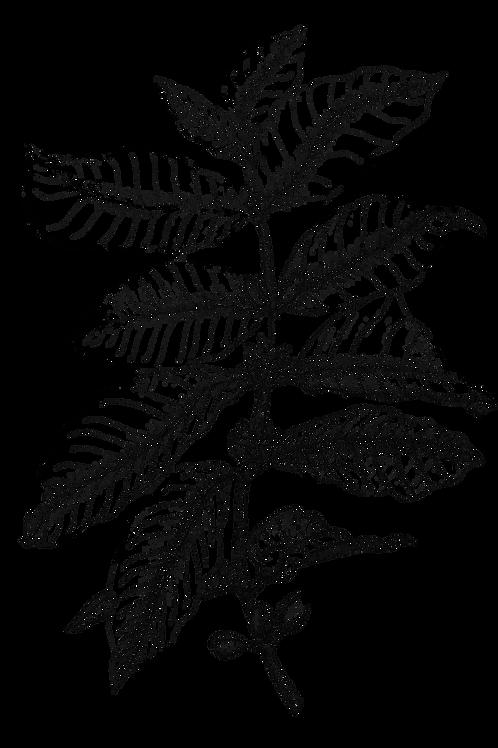 Coffee Plant Print Series