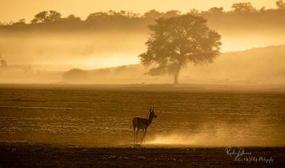 Sunrise-Springbok-01.jpg