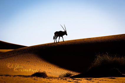 oryx-1 (1 von 1).jpg