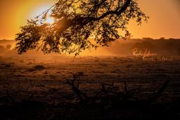 Nature-1A.jpg