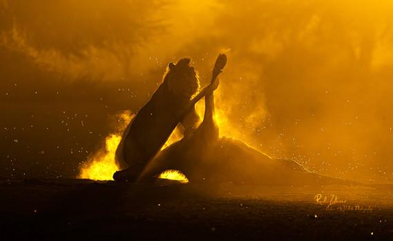 Lion Kill-sunrise-03.jpg