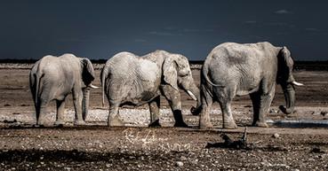 Elefanten-9 (1 von 1).jpg
