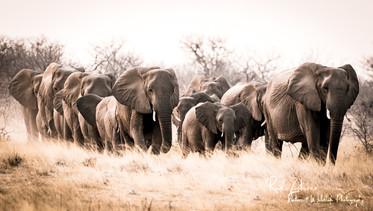 Elephants-HiKey1 (1 von 1).jpg