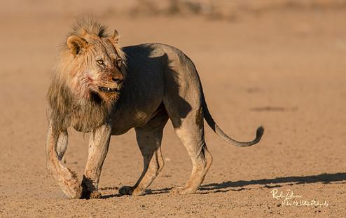 Lion Kill-18.jpg