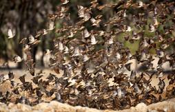 Bird Invasion-2.jpg