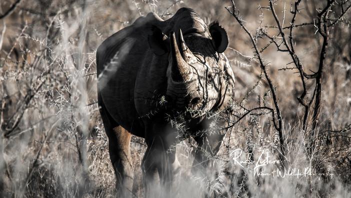 rhino-3.jpg