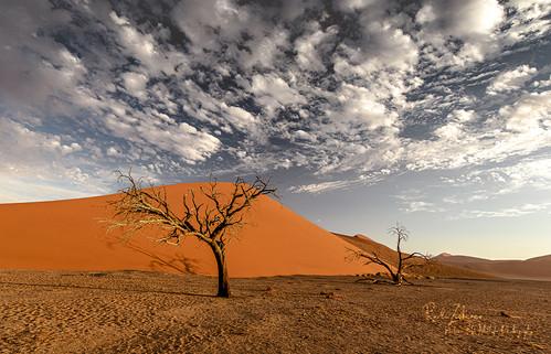 Dune-04.jpg