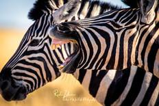 zebras-etosha1 (1 von 1).jpg