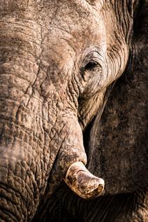 elefant3 (1 von 1).jpg
