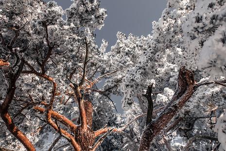 winterbaum-2 (1 von 1).jpg