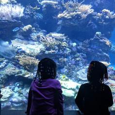 Aquarium at Cal Academy of Sciences
