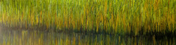 Marais verdoyants (2020)