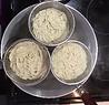 Noodle pots+strainer daily rental