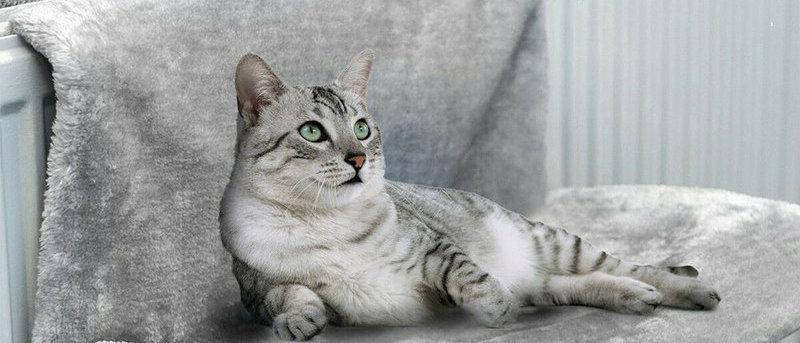 पालतू बिल्ली पशु लक्जरी रेडिएटर बेड हैंगिंग विंटर वार्म फ्लेस बास्केट