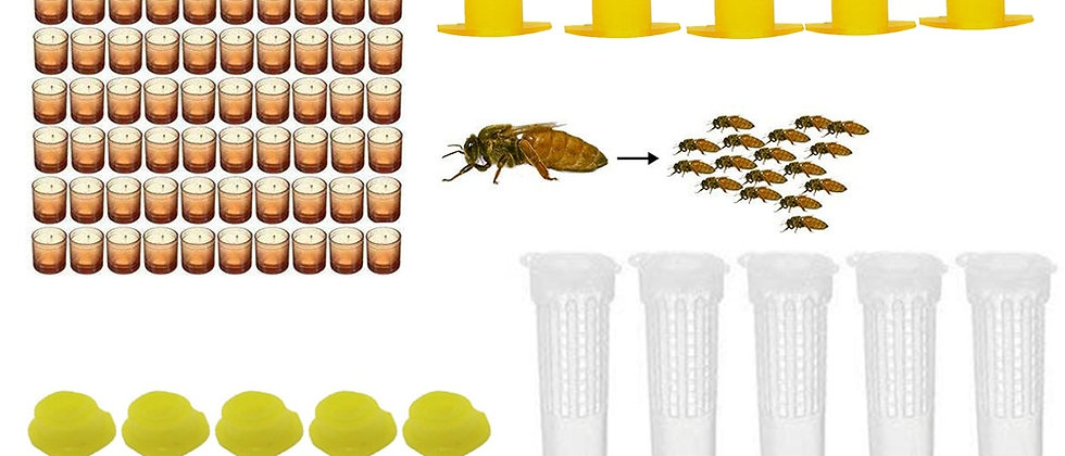 Complete Bee Queen King Rearing Kit System Cages Bees Tools Set Supplier Tool