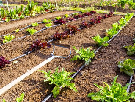 Irrigation in the Garden