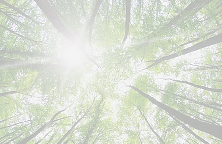 trees less opacity.png