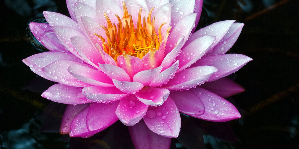 Blooming in the Dark: Tools for Building Your Clients' Resilience