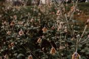 Ekta + Rob by Meadowlark Stills