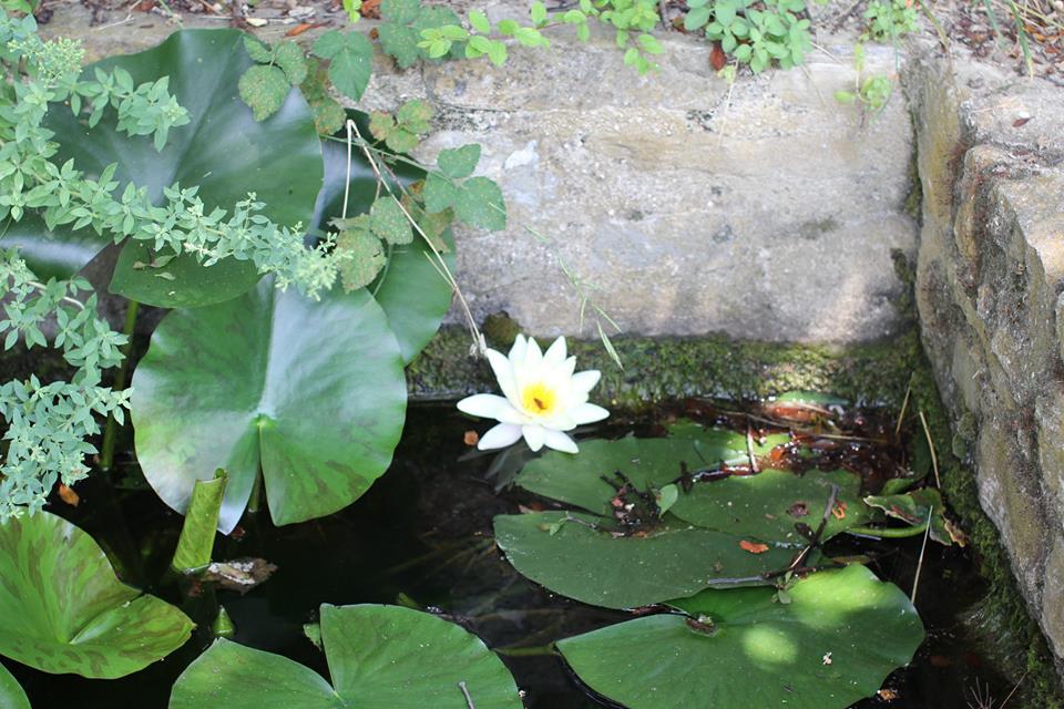 лотос lotus