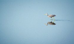 birds goa