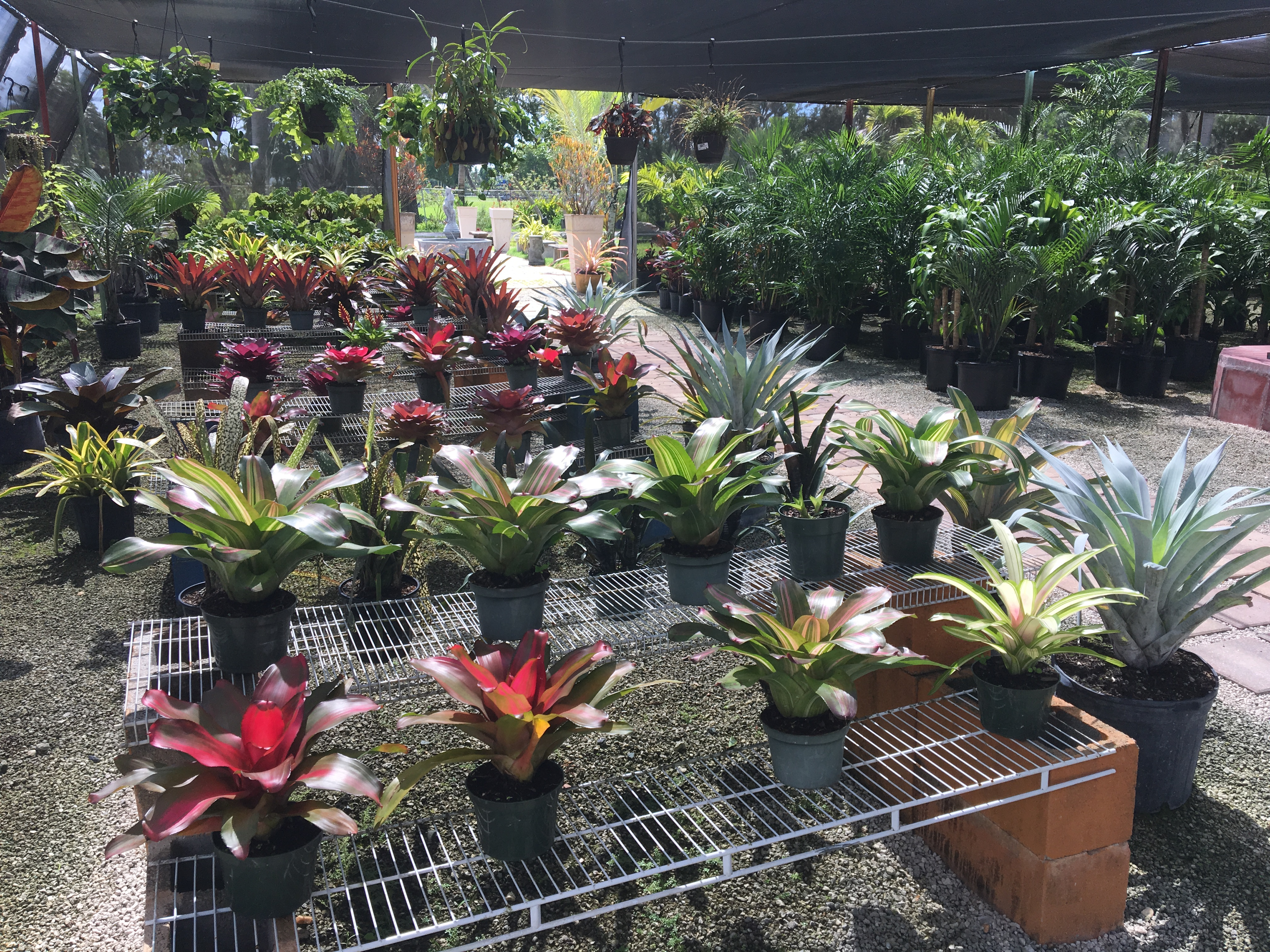 Indoor Plants And Shade Lighthouse Garden Center Miami