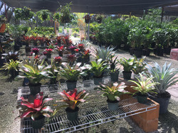 Indoor plants and shade plants
