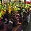 Thumbnail: Croton Magnificent