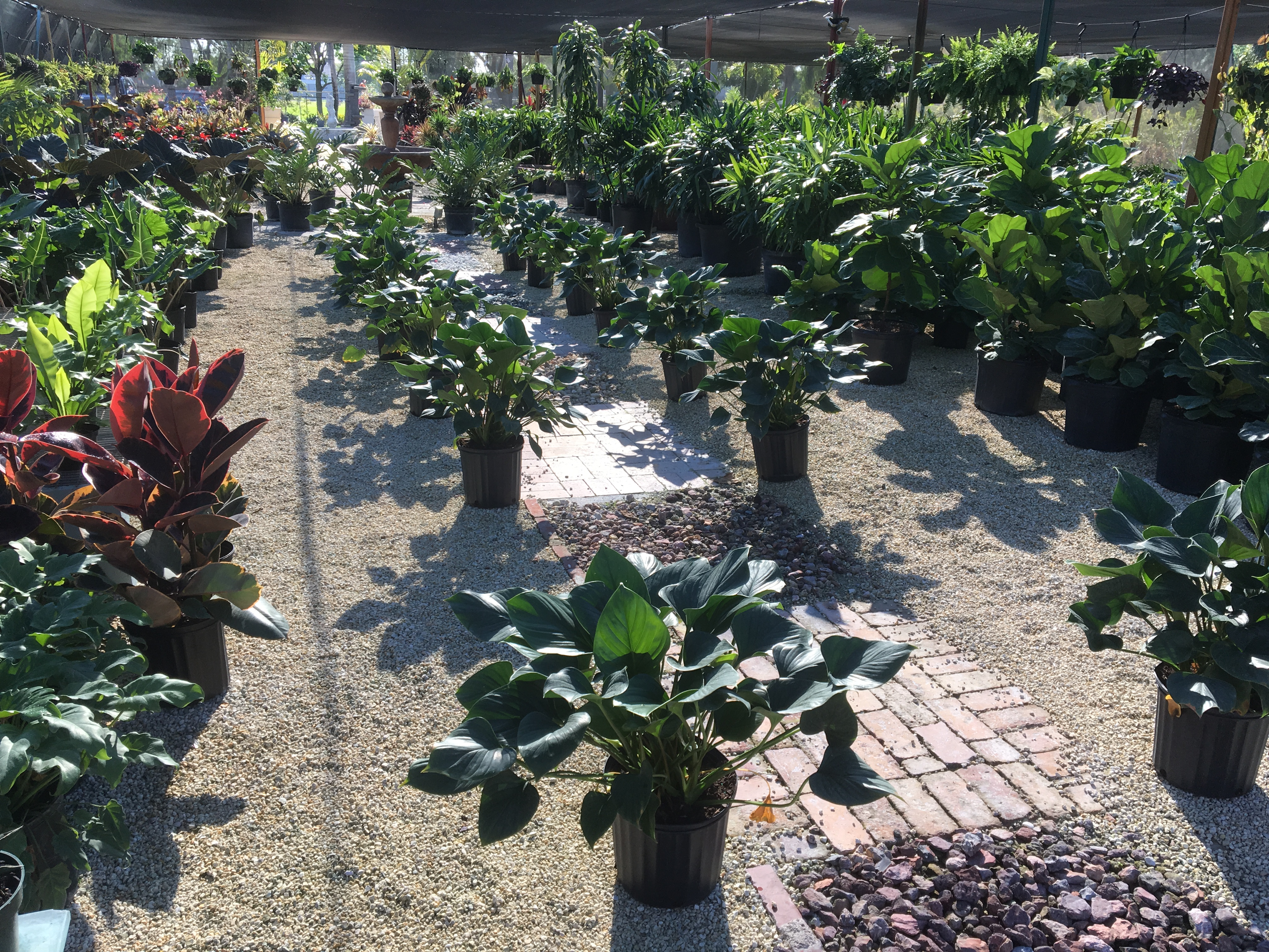 Indoor Plants and Shade Plants Miami