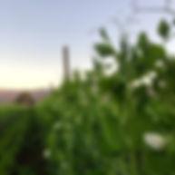 Sunrise Organic Farm.jpg