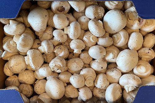 White medium mushrooms   5 lbs