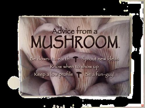Advice from a Mushroom Magnet
