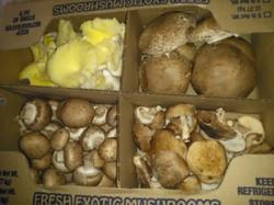 3 lb Exotic mixed box