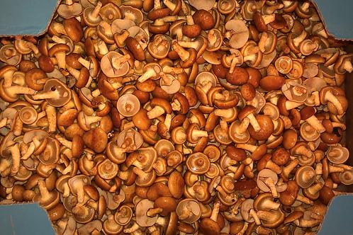Nameko Mushrooms  3 lbs