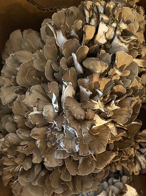 Maitake (Hen of the Woods)  3 lbs