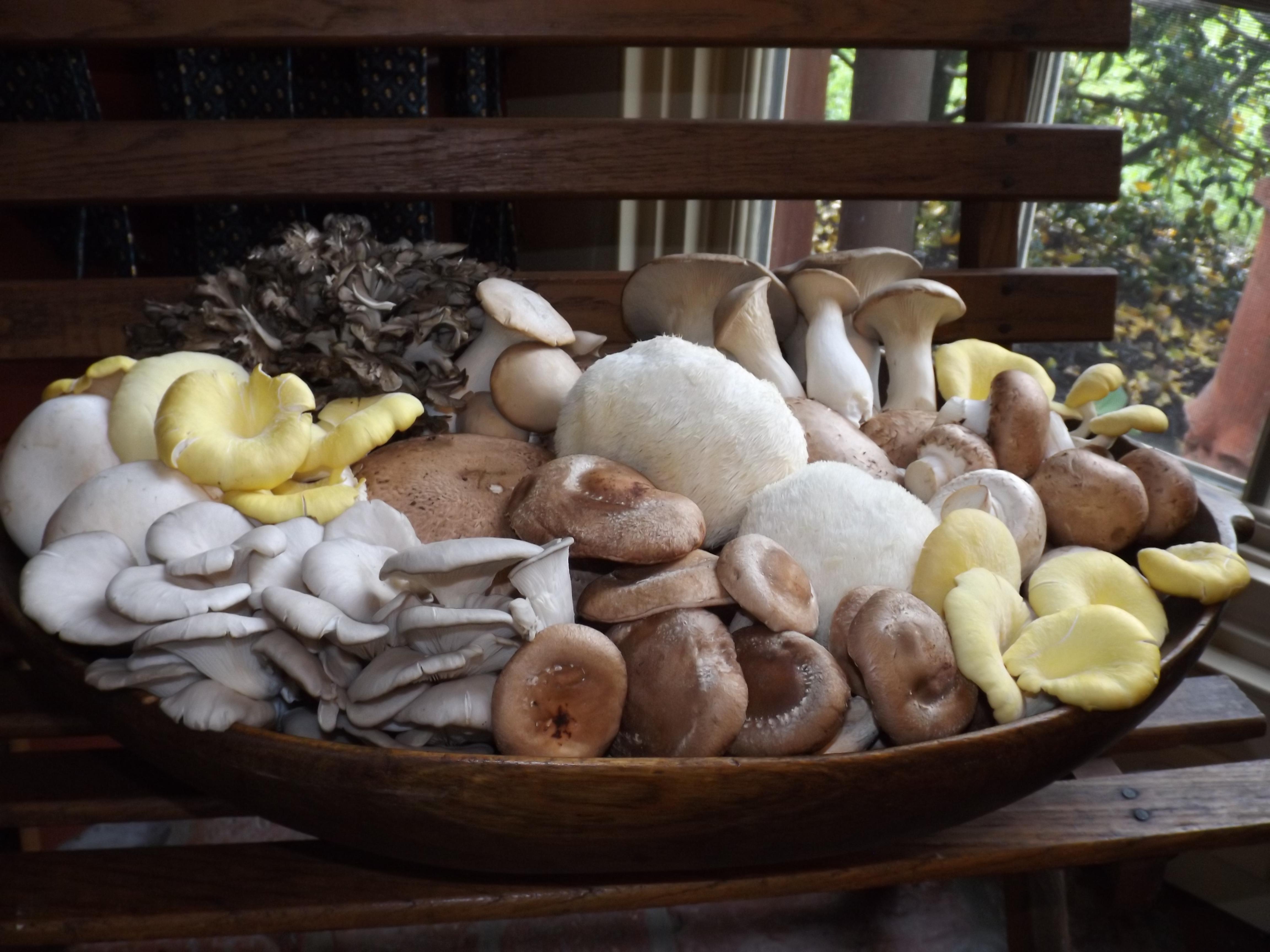 Phillips mushroom bowl