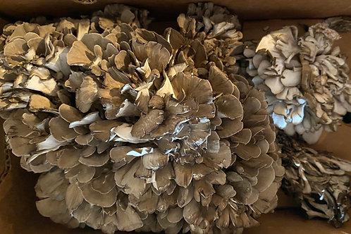 Maitake Mushrooms  1 lb.