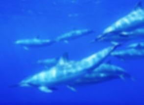 dolphins 14.jpg
