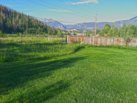 Summer Maintenance for a Healthy Lawn