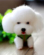 Felting kit dog white.jpg