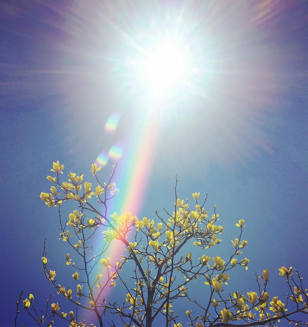 magnolia, sunshine, rainbow